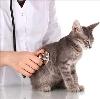 Ветеринарные клиники в Валааме